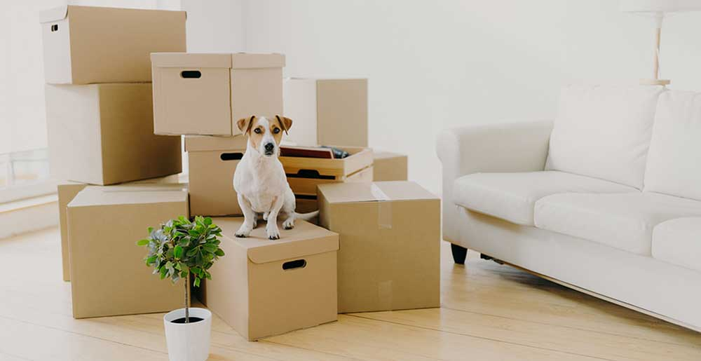 An Organized Life - Moving and Relocation Services